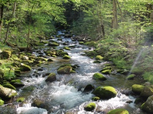 Where are you in the stream of life?